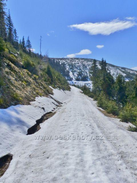 Vrstevnicová cesta se blíží k úbočí Slamníku (alias Sviní hory), 1233 m.n.m.