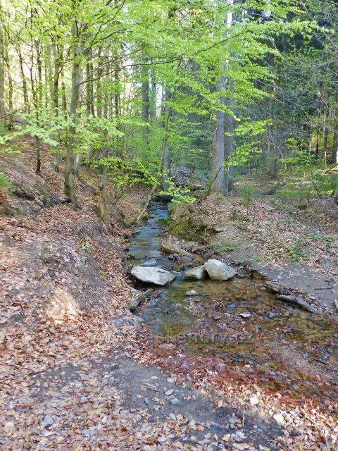 Pravostranný přítok potoka Hvězdná