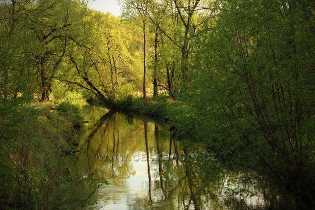 Řeka Bílina u Dolánek