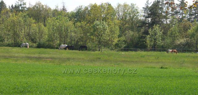 Na pastvině u Žumberku