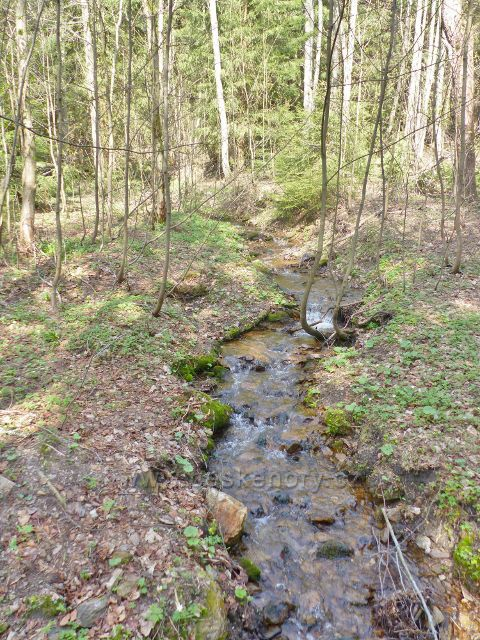 Pravostranný přítok potoka Hadinec protéká napříč PR Černý důl