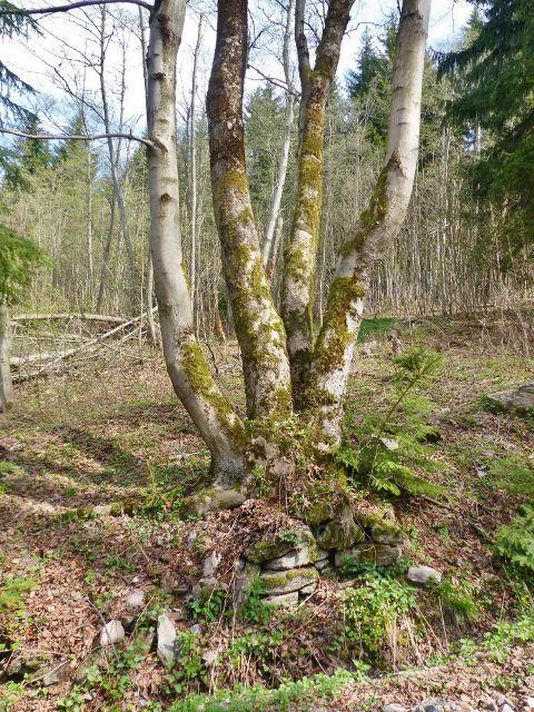 Cesta z Hadince na Vysoký kořen - i tady stávaly chalupy osady Hadinec