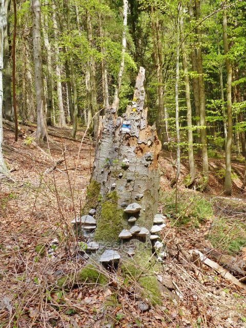Cesta po modré TZ z Vysokého Kořenu do Neratova