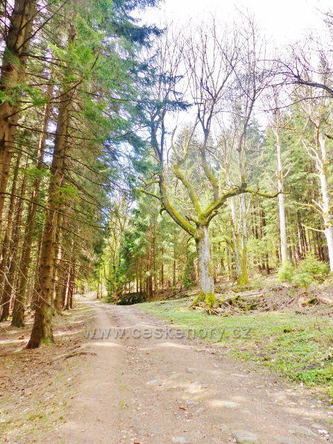 Cesta po modré TZ z Vysokého Kořenu do Neratova (zpětný pohled)