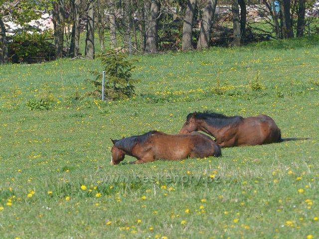 Koně ve výběhu na úbočí Valu