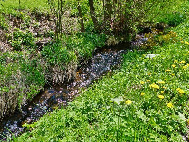 """Dolní Orlice - ještě """"potok"""" Tichá Orlice"""