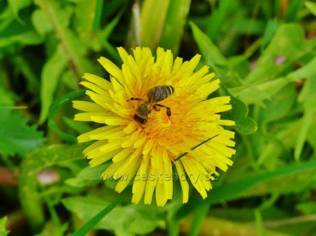 Písečná - pastva hmyzu