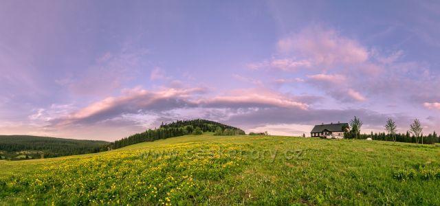 Úpolínová louka pod bukovcem na sklonku dne,i letos jako každé jaro rozkveta žlutě úpolínama louka pod Bukovce.