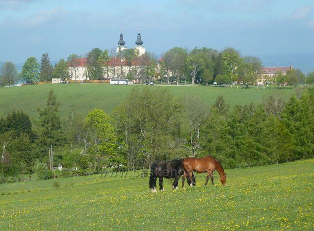 Dolní Hedeč - pastva koní na úbočí Valu. V pozadí klášter.