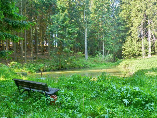 Hnátnice - rybníček pod pramenem Hnátnického potoka