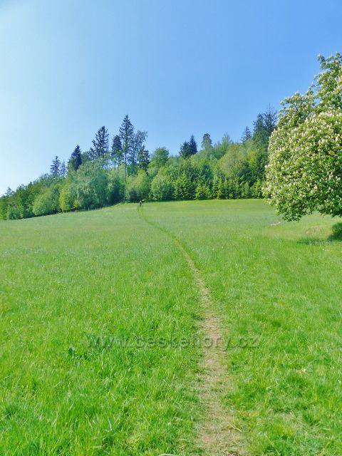 Žampach - stezka po žluté TZ z Hlavné vede přes pastvinu po úbočí Hory