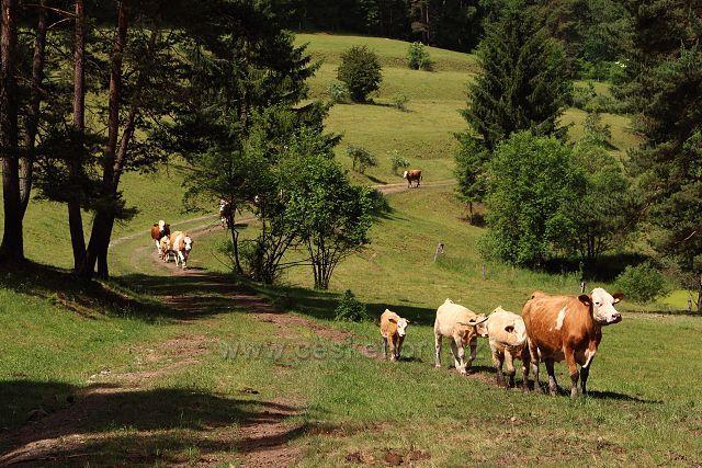 Pastviny u Bečova