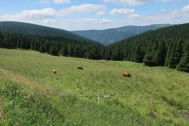 Pastvina pod Švýcárnou