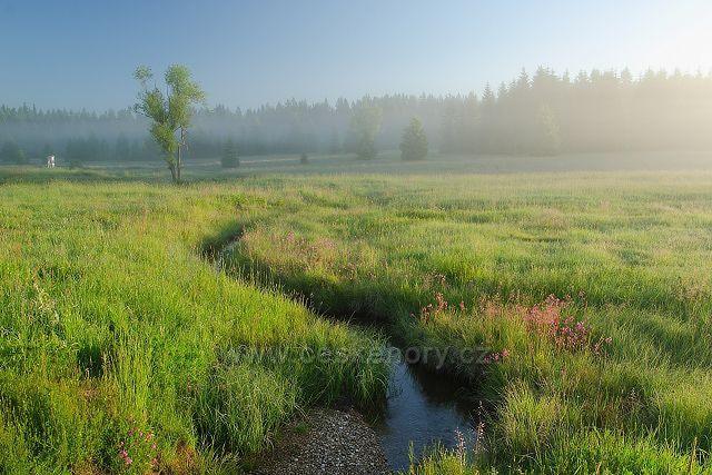 Prameniště Pohořského potoka