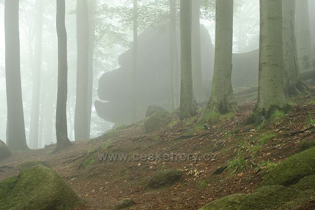 Gorila v mlze, skalní útvar v Oldřichovských bučinách