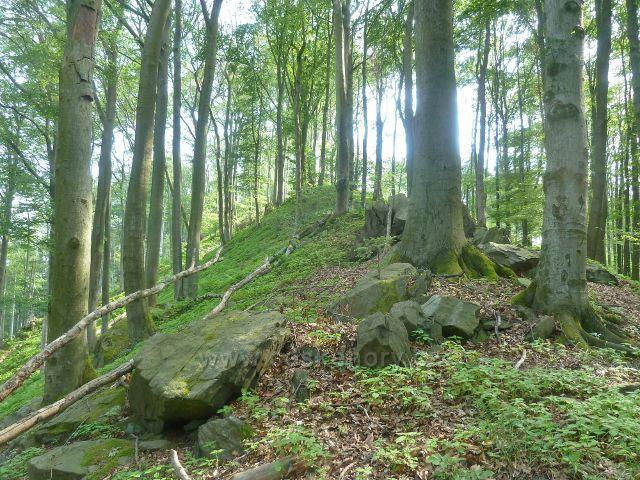 Potštejn - stezka po hřebenu Kaprasdě je ve své horní části značně kamenitá
