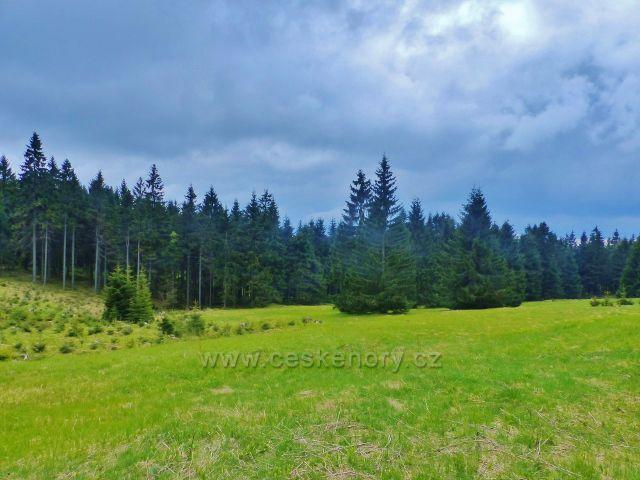 Lesní louka tvoří větší  enklávu u cesty po modré TZ do Říček
