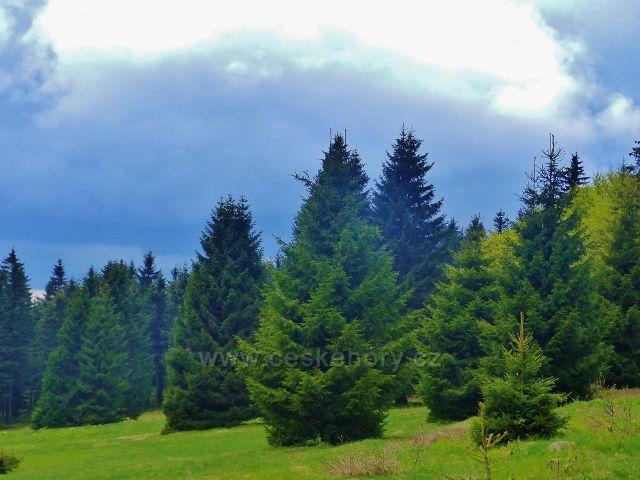 Lesní louka podél cesty po modré TZ do Říček