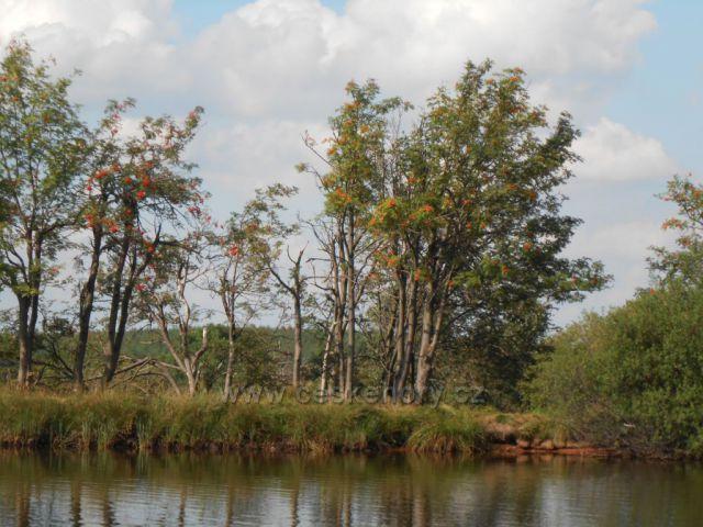 Břízy a Jeřabiny u Dlouhého rybníka
