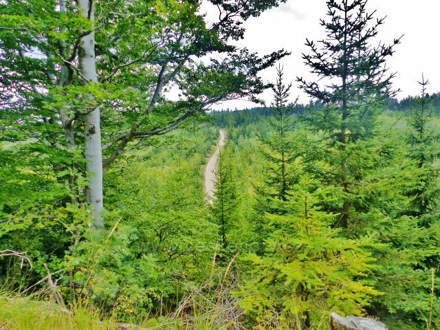 Pohled z odbočky k vrcholu Královeckého Špičáku na cestu po modré TZ stoupající k vrcholu Kozlíku(788 m.n.m.)