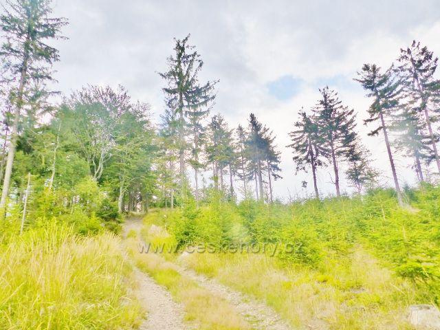 Zpětný pohled na cestu z vrcholku Mravenčího vrchu