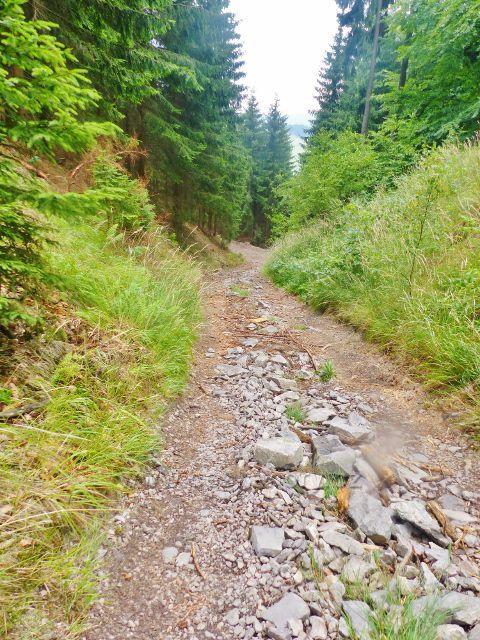 Sestupová cesta po modré TZ z Mravenčího vrchu