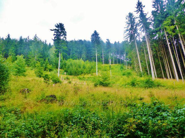 Lesní porost na svahu Mravenčího vrchu