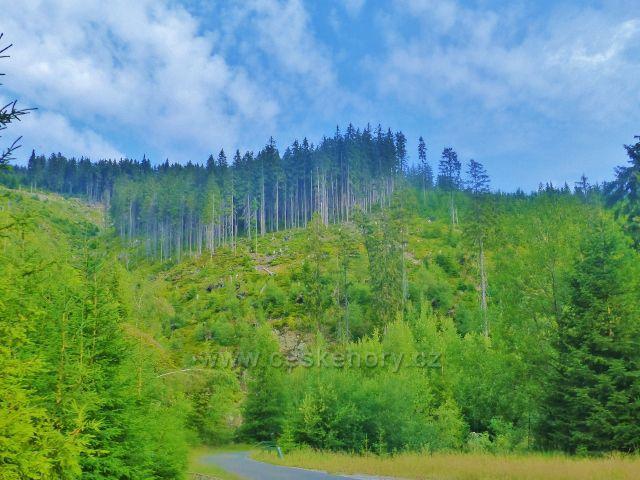 Žacléřské boudy - pohled na úbočí Svorové hory nad Doubravovým vodopádem