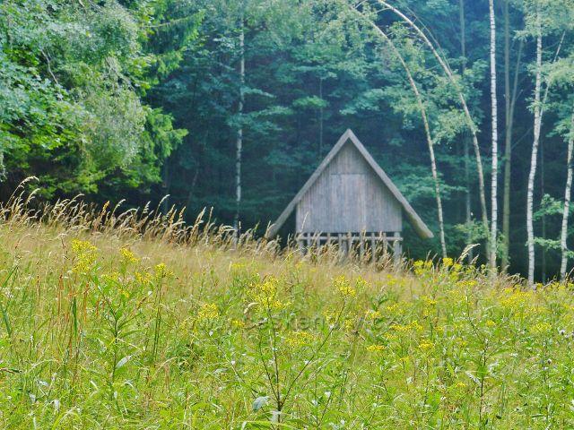 Svoboda nad Úpou - na konci lesní loučky u Růženiny cesty za porostem žlutě kvetoucího starčeku vykukuje krmelec