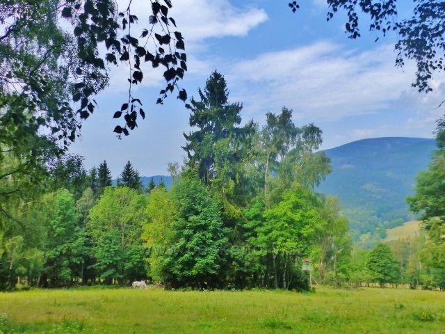 Svoboda nad Úpou - pastvina pod Růženinou cestou po zelené TZ