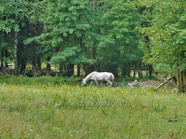 Svoboda nad Úpou - koňský výběh pod Růženinou cestou