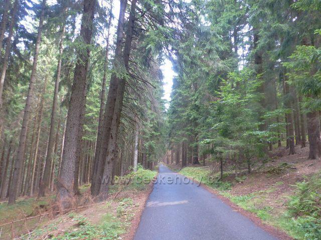 Svoboda nad Úpou - trasa Růženiny cesty po zelené TZ vede zčásti po silničce zvané Rýchorská cesta
