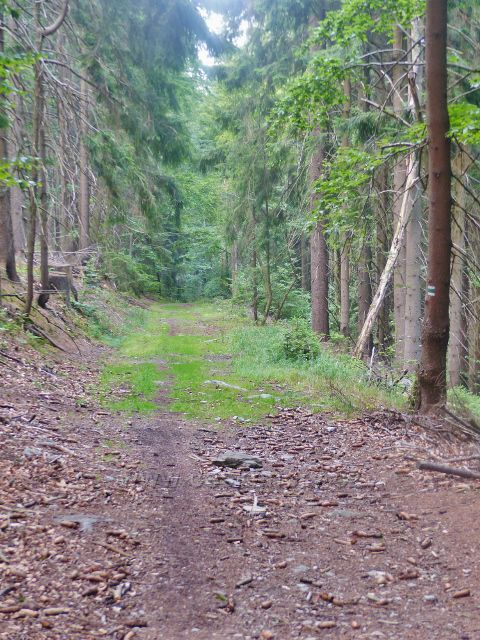 Svoboda nad Úpou - trasa Růženiny cesty odbočila z Rýchorské cesty