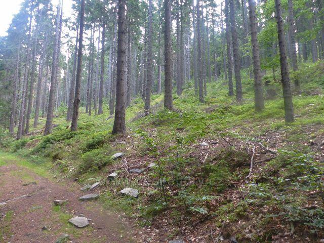 Svoboda nad Úpou - trasa Růženiny cesty mírně stoupá vzrostlým lesem