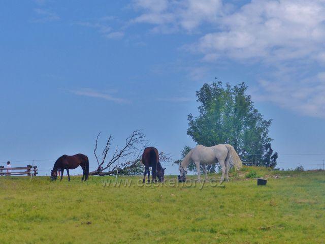 Rýchory - koně na pastvině u Rýchorské boudy