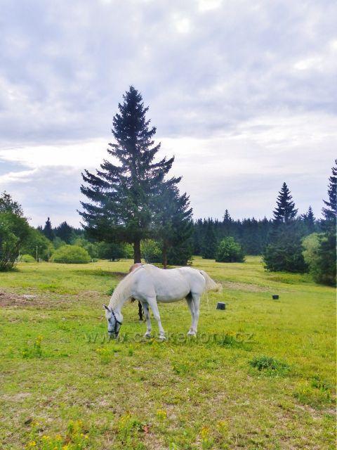 Rýchory - kůň na pastvině u Rýchorské boudy