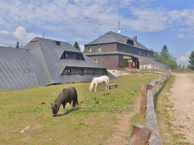 Rýchory - poníci ve výběhu u Raychlebské boudy