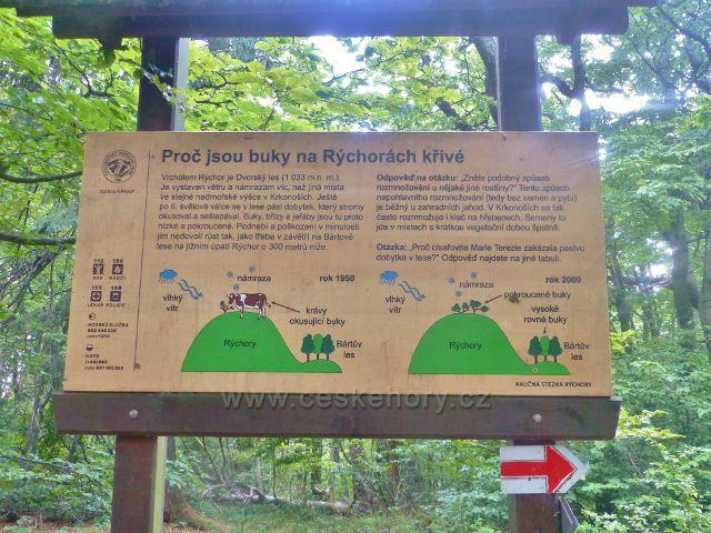 Rýchory - Dvorský les, panel na NS Rýchory pojednávající o charakteru bukového porostu na vrcholu Dvorského lesa(1033 m.n.m.)