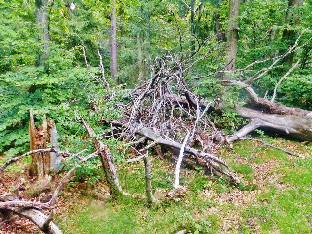 Rýchory - Dvorský les, bezzásahové pásmo na trase NS Rýchory