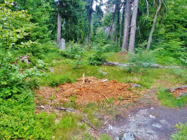 Rýchory - Dvorský les, trasa NS Rýchory