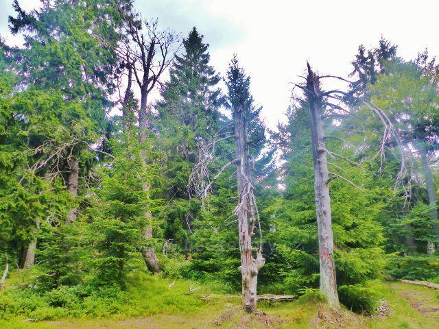 Rýchory - Dvorský les,NS Rýchory prochází 1.ochranným pásmem