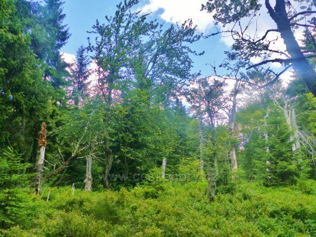 Rýchory - Dvorský les,MS Rýchory prochází 1. ochranným pásmem