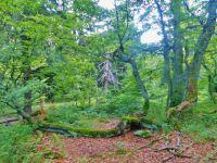 Rýchory - Dvorský les, NS Rýchory prochází 1.ochranným pásmem