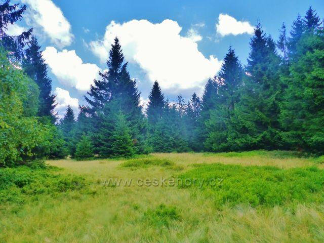 Rýchory -Dvorský les, NS Rýchory procházi kolem lesní loučky