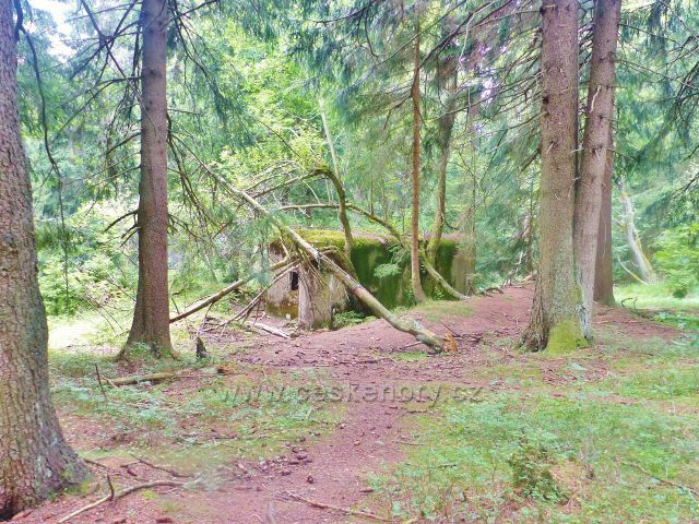 Rýchory - Dvorský les, řopík na trase NS Rýchory ukrytý v lesním porostu