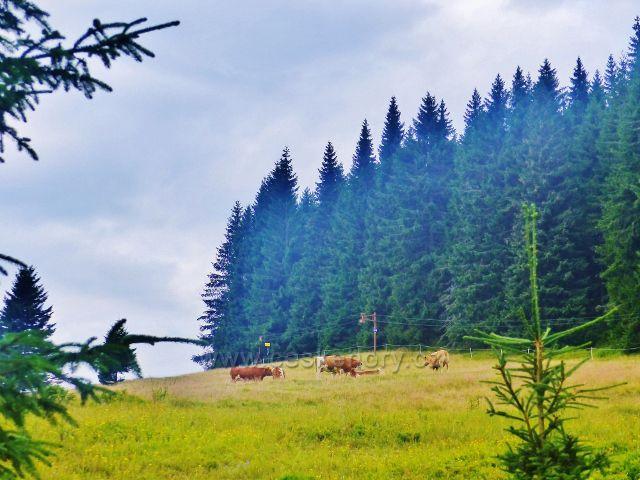 Malá Úpa - pastvina nad Sovím potokem
