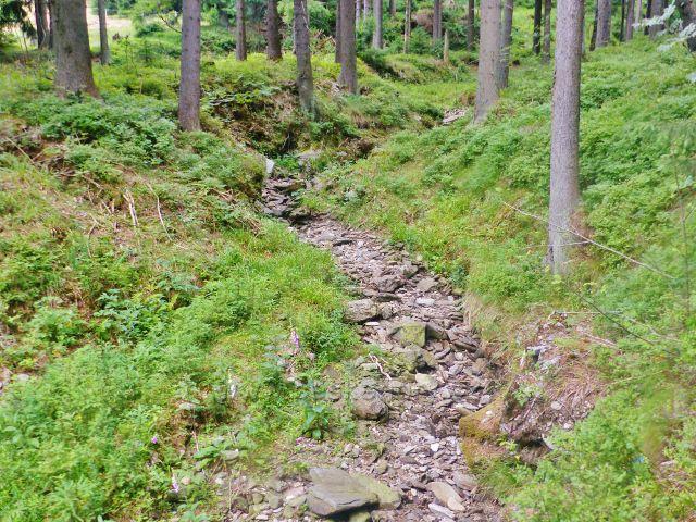 Malá Úpa - Dobytčí potok