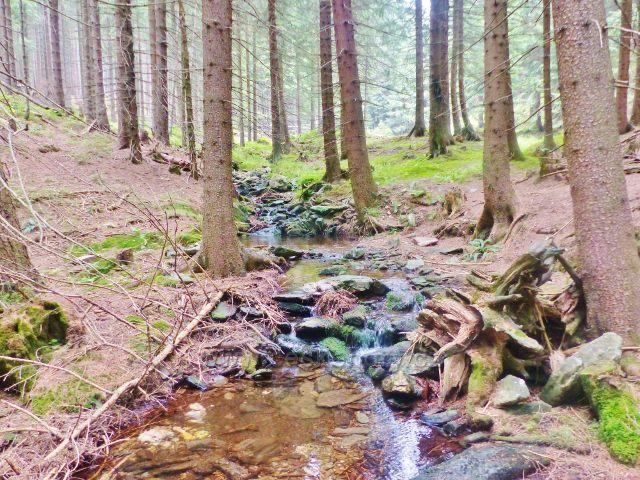Horní Malá Úpa - potok podél trasy po zelené TZ k rozcestí Pod Jelenkou