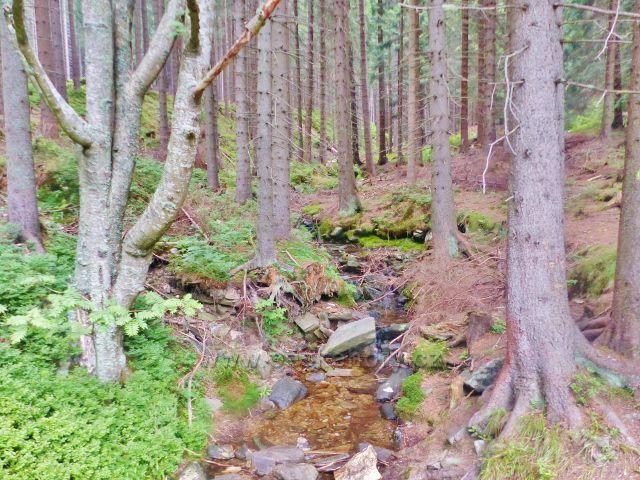 Horní Malá Úpa - jeden z hlavních přítoků Sovího potoka nad mostkem na rozcestí Pod Jelenkou