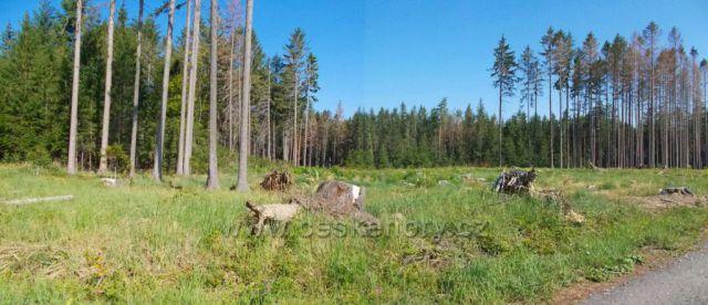 Nemocné lesy na Hlinecku